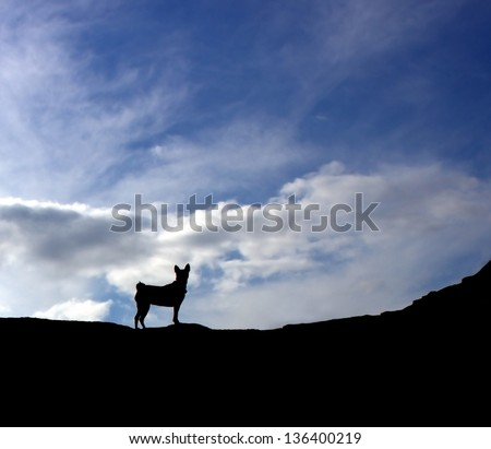 Dog silhouette against cloudy sky