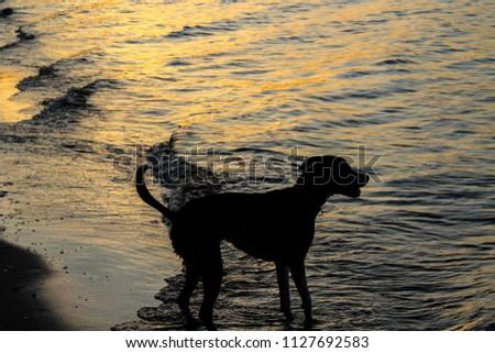 Dog Silhouette on the beach #1127692583