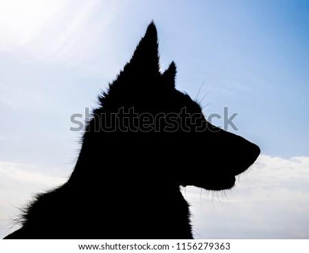 Dog Silhouette sky #1156279363