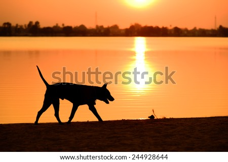 dog silhouette with sunset and lake