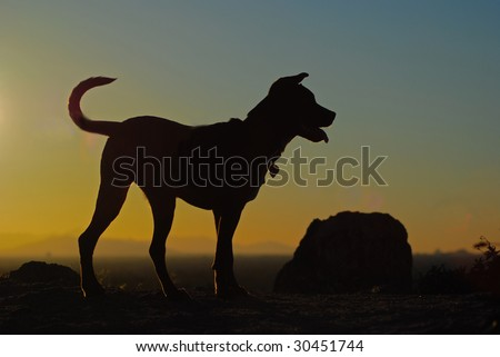 Dog silhouetted by the sunset