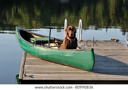 Dog sits in canoe on dock ready to paddle/Let's Paddle