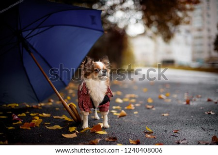 dog sits near yellow leaves umbrella