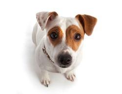 dog sitting in a collar