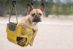 Dog sitting in a swing