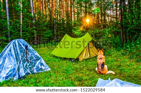 Dog sitting in forest camp sunset scene. Sunset forest camp dog. Dog in forest camp sunset scene. Sunset scene in forest camping with dog