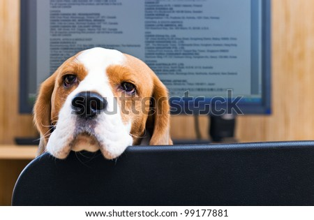 Dog sitting in front of the computer. Focus on a dog. - stock photo