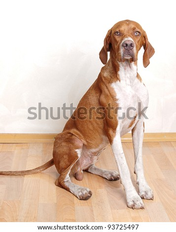 dog sitting in front of wooden floor