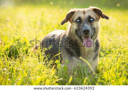 Dog sitting in the grass with light from behind #633624392