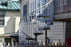 Dog sitting on spiral staircase