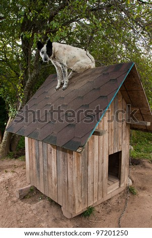 Dog sitting on te roof of doghouse