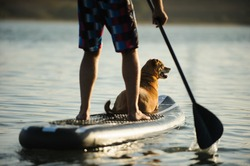 Dog sitting on the front of a paddleboard with owner paddling