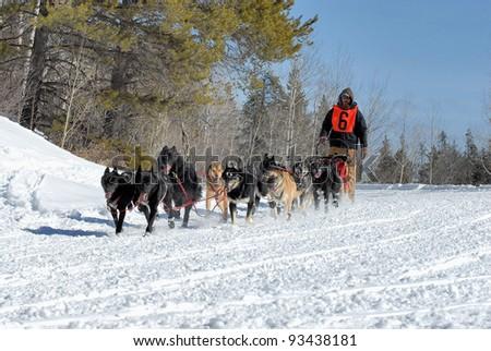 Dog sled team musher running his team through the mountains.