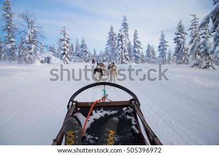 Dog sledding Stock photo ©
