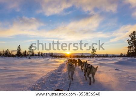 Dog sledding with huskies in beautiful sunset Stock photo ©