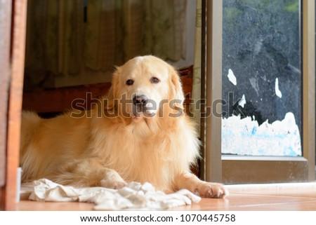 dog sleep and playing #1070445758