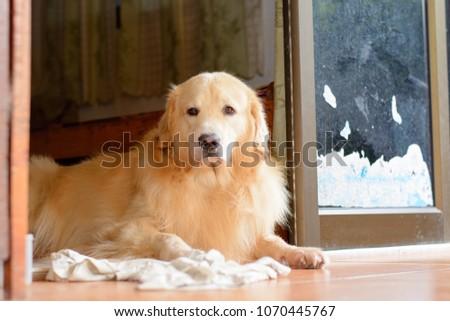 dog sleep and playing #1070445767