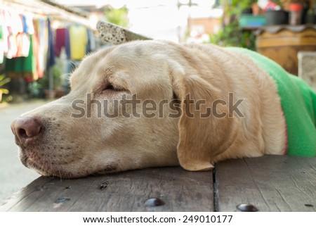 dog sleep on location