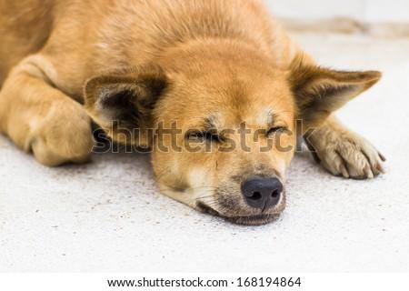Dog sleep on the street somewhere in Bangkok, Thailand