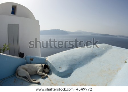 dog sleeping in shade classic greek island architecture santotini