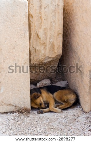 Dog sleeping in shadow under marble blocks