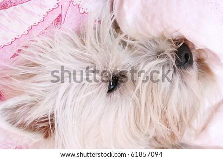 Dog sleeping on a bed .