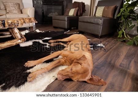 dog sleeping on the floor of the living room
