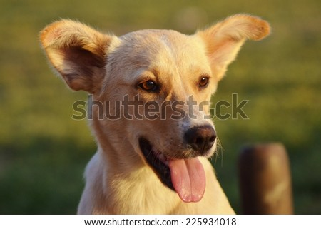 Dog Smiling, Dog, Ears, Animal, Dog Face