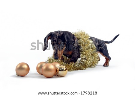 dog sniffing christmas ornaments
