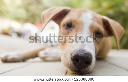 Dog staring in the camera - shallow depth of field