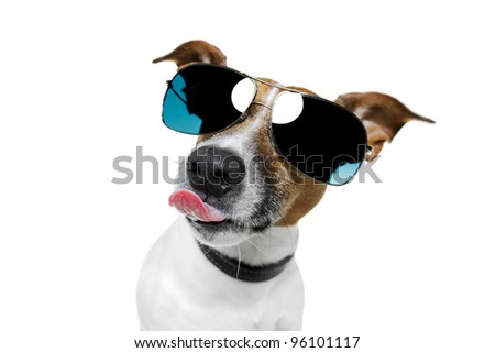 dog sticking out the tongue