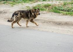 Dog, stray dog