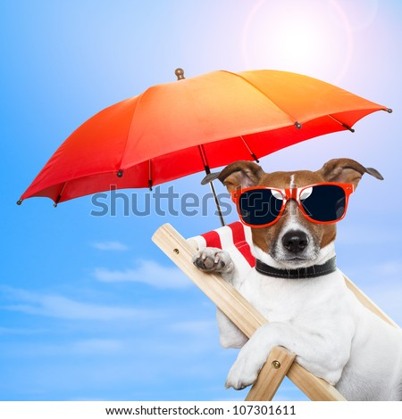 dog sunbathing on a deck chair with red umbrella - stock photo