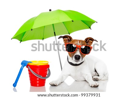 dog sunbathing with umbrella