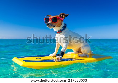 dog surfing on a surfboard wearing sunglasses  at the ocean shore