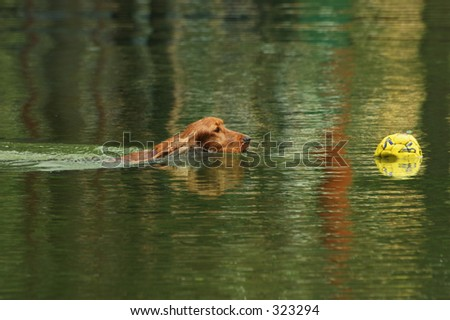 Dog swimming after a soccer ball
