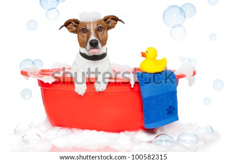 Dog taking a bath in a colorful bathtub with a plastic duck