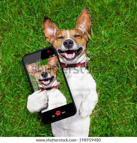 dog taking a selfie  and laughing about that