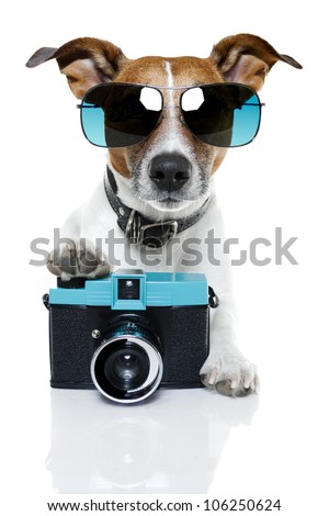dog taking pictures with a fancy photo camera