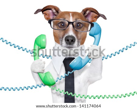 dog tangled in  a telephone and cable chaos
