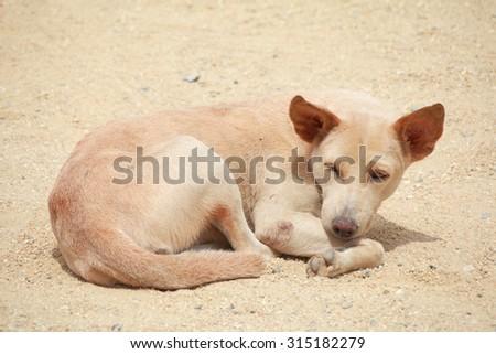Dog , The Dog sleep .