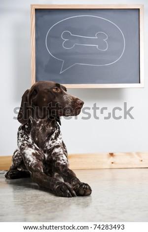dog thinking about a bone