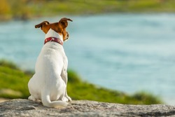 dog thinking and watching about the future