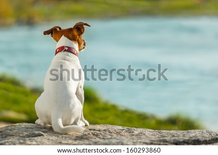 dog thinking and watching about the future #160293860