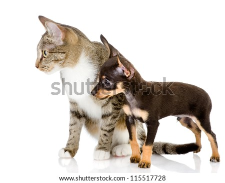 dog together with a cat look aside. isolated on white background
