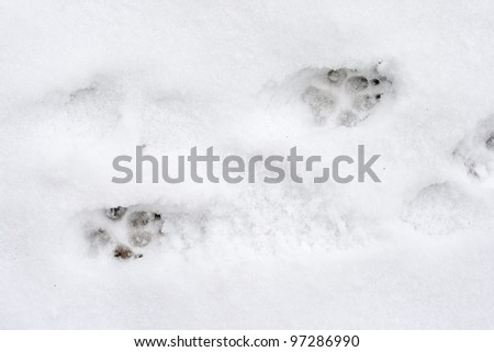 Dog tracks on snow