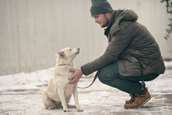 Dog trainer canine rehabilitation therapist for dogs rehabilitation program. Young dog trainer helps a stray dog with a behavioral problem abandoned by puppy mills gaining his trust