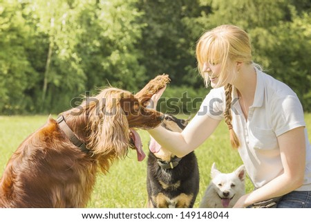 Dog trainer training irish setter to give high five