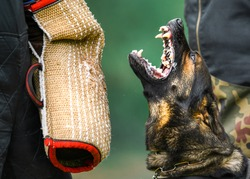 Dog training on the playground in the forest. German shepherd aggressive dog train obedience. K9 Bite sleeve detail.