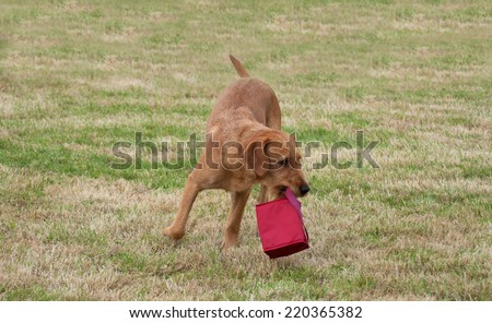 Dog turning on the run as he carries bag in mouth
